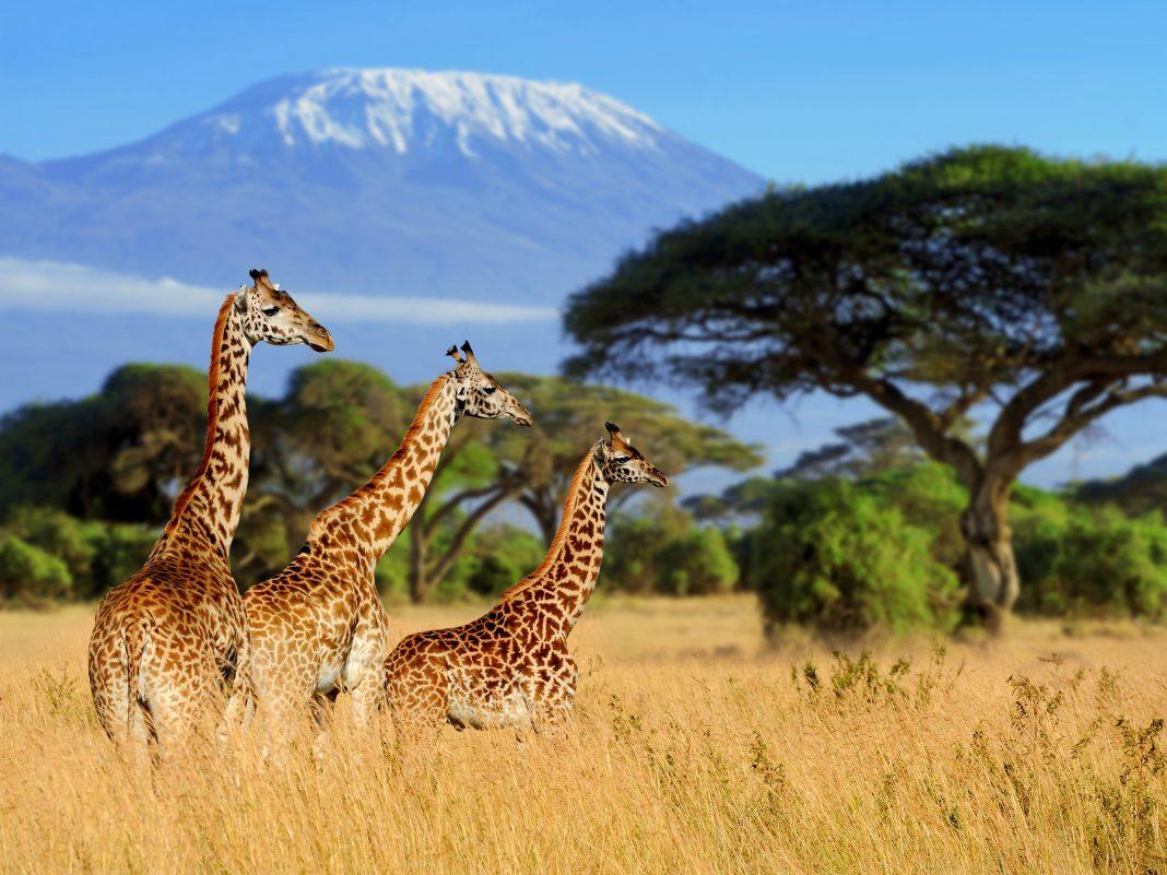 10-activites-a-faire-afrique