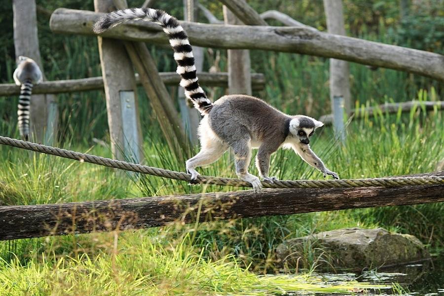 Conseils pour voyager à Madagascar
